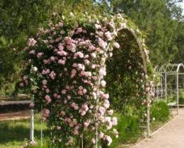 Кованые арки в Воронеже №25